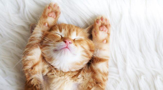 Kediler gibi uyumanızı sağlayacak yoga hareketi