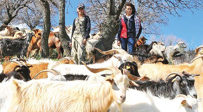 İki kız kardeş her gün 400 keçiye bakıyor.