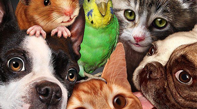 evcil hayvan beslemek Foto: Bülten