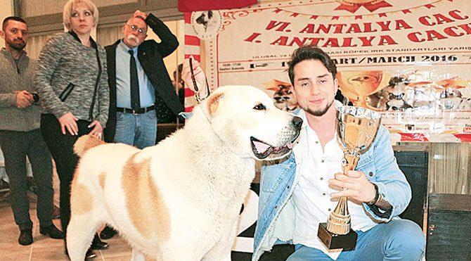 Yarışmada Cüneyt Akar'ın yetiştirdiği Bex adlı 15 aylık Alabay ırkı köpek birinci oldu.