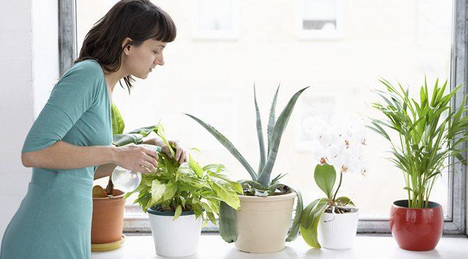 Evdeki bitkileriniz çocuklarınızı zehirleyebilir!
