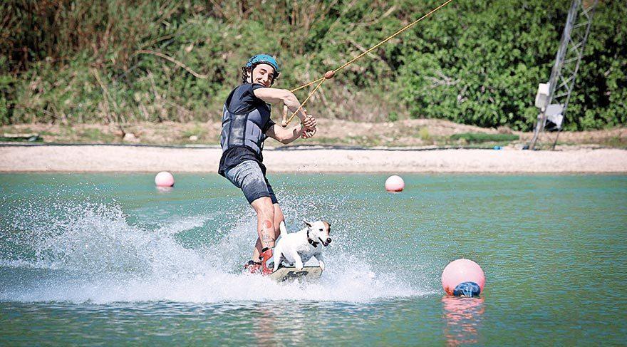 Sörfçü köpekler