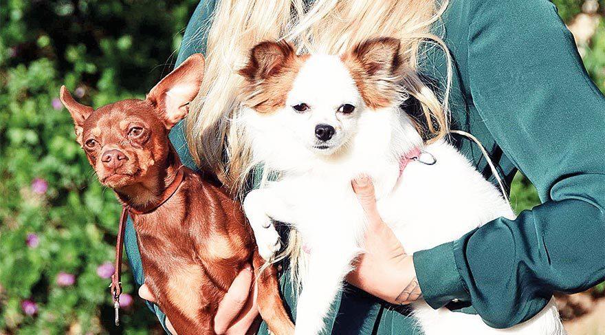 Köpek yetiştiricisiyle davalık oldu