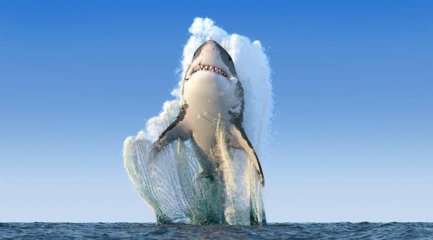 Bu köpek balıkları esrarengiz bir şekilde yok oluyor