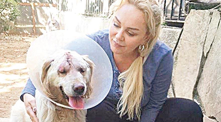 Sarıyer Belediyesi Hayvan Kısırlaştırma ve Rehabilitasyon Merkezi'nde dövülen ve kafatası kırılan köpeğin tedavisinin sürdüğü öğrenildi. Barınakta görevli A.İ. adlı kişinin dövdüğü iddia edilen kafatası kırık köpek ameliyatla hayata döndü.