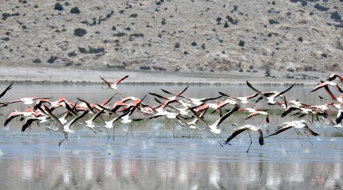 Flamingoların son sığınağı Akgöl