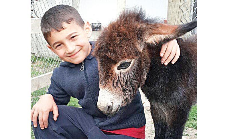 Kangal köpeği sıpaya annelik yaptı