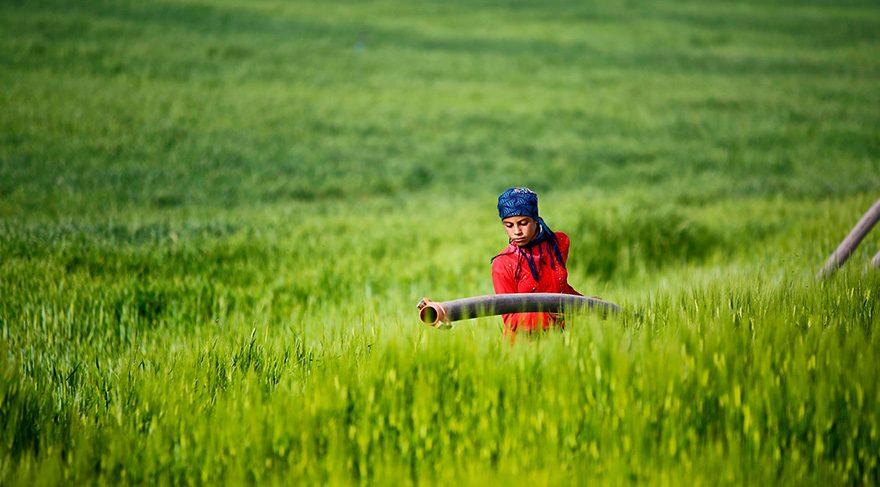 Yarışmada birincilik ödülü alan 'Harranlı Kız' fotoğrafı da gösteriyor ki Harran'da kadınlar çalışma hayatında son derece aktif.