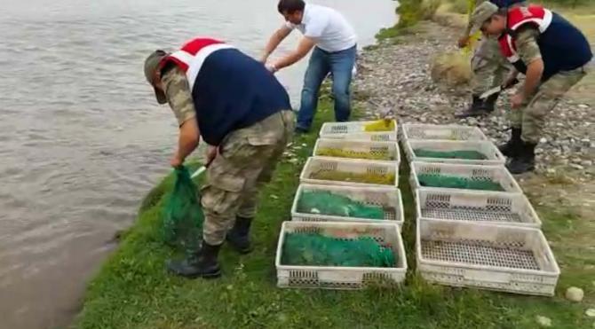 Diyarbakır'da 71 kilo canlı kurbağa avlayan 4 kişiye 163 bin lira ceza