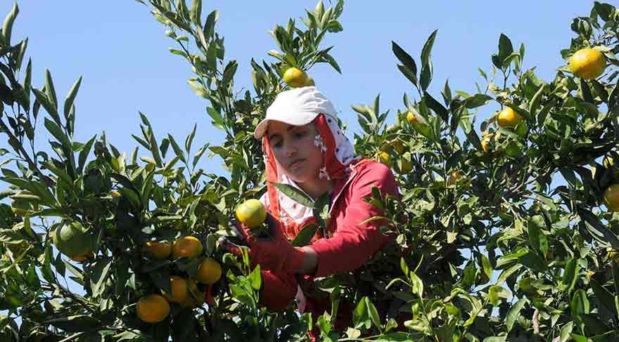 'Türk Reçetesi' 6 ülkede 3 milyon çiftçiye ulaştı