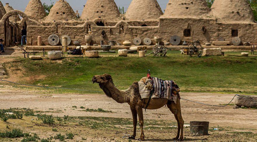 Harran evlerinin eski dönemlerde özel bir toprağın gülyağıyla ezilip karıştırılmasından yapıldığı söyleniyor.