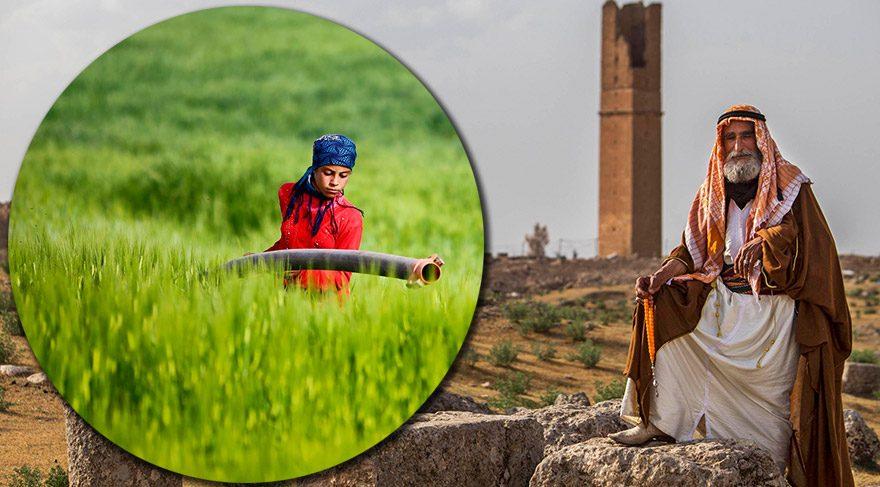 Harran'a gitmek için 9 neden