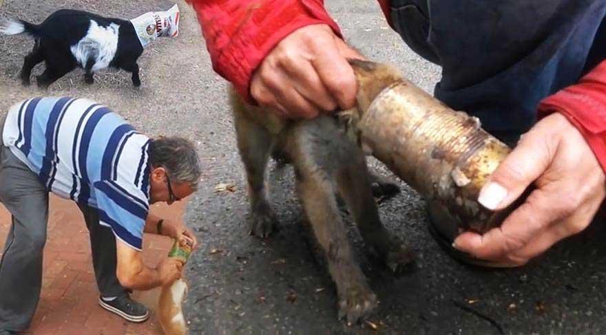 Attığınız çöpler hayvanlar için ölüm tuzağı