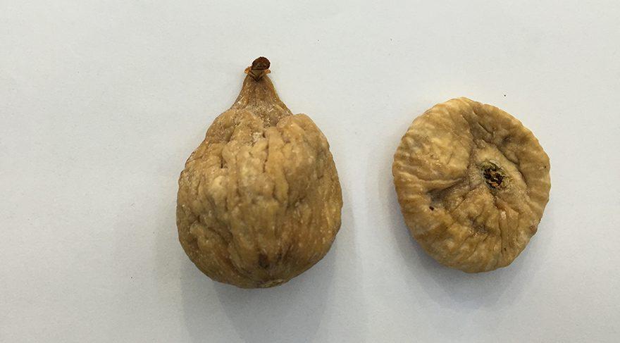 Kuru incir çoğumuzun vazgeçilmezidir lakin kuru incirimizin de en büyük sorunlarından biri maalesef alfatoksindir.