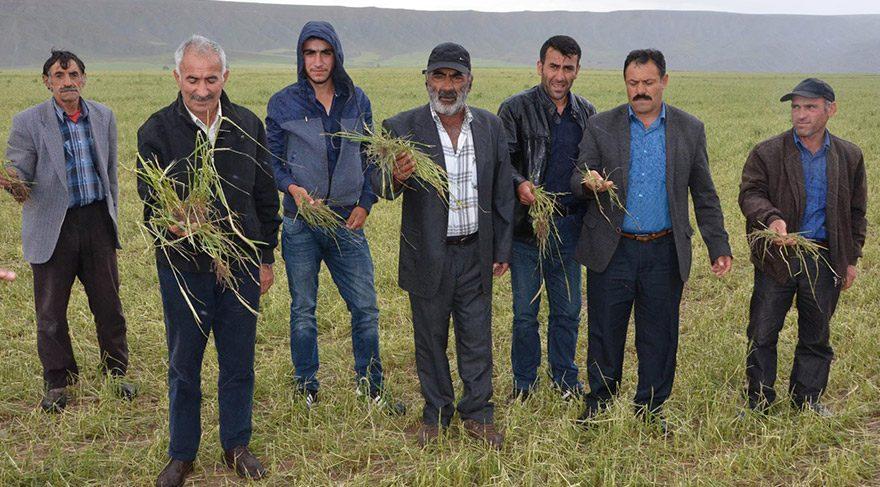 Sivas'ta dolu yağışı 35 bin dönüm ekili alana zarar verdi