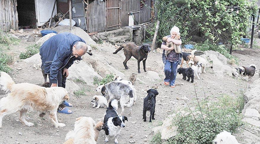 Emekli maaşıyla sokak hayvanlarına bakıyorlar
