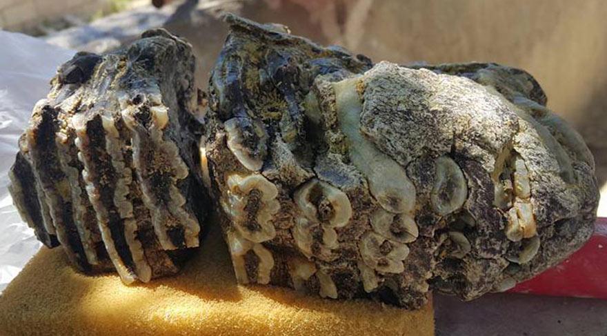Konya'da 2,5 milyon yıllık mamut dişi fosili bulundu