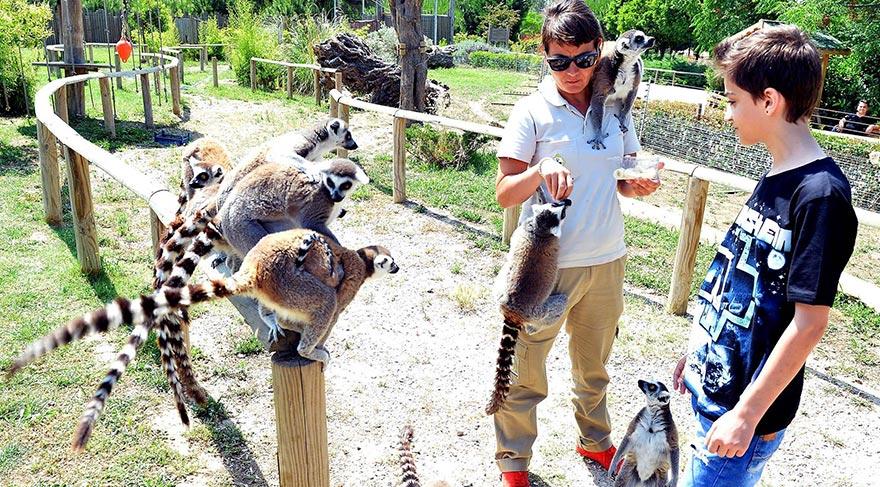 Mersin, Antalya, Bursa, Eskişehir, Muğla, Gaziantep ve Eğirdir'deki hayvanat bahçelerine 2015 yılı başından bu yana toplam 217 üretim fazlası hayvan gönderildi.