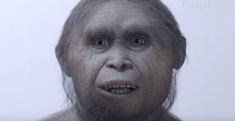 700 bin yıllık fosiller