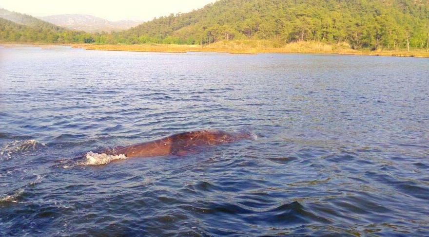 Marmaris'te balina heyecanı