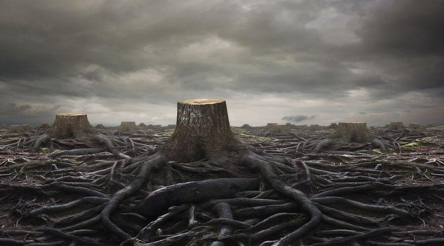Esmiyor değil, ağaçları kesiyorlar!