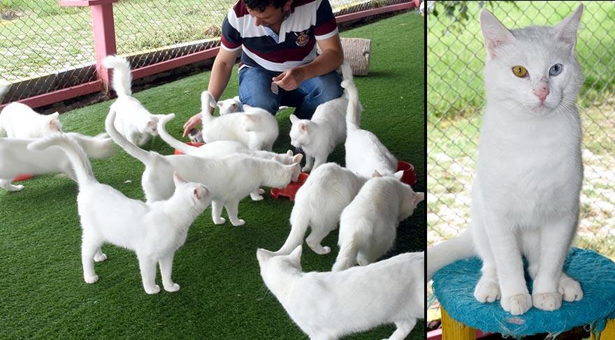 Van kedilerine soy kütüğü