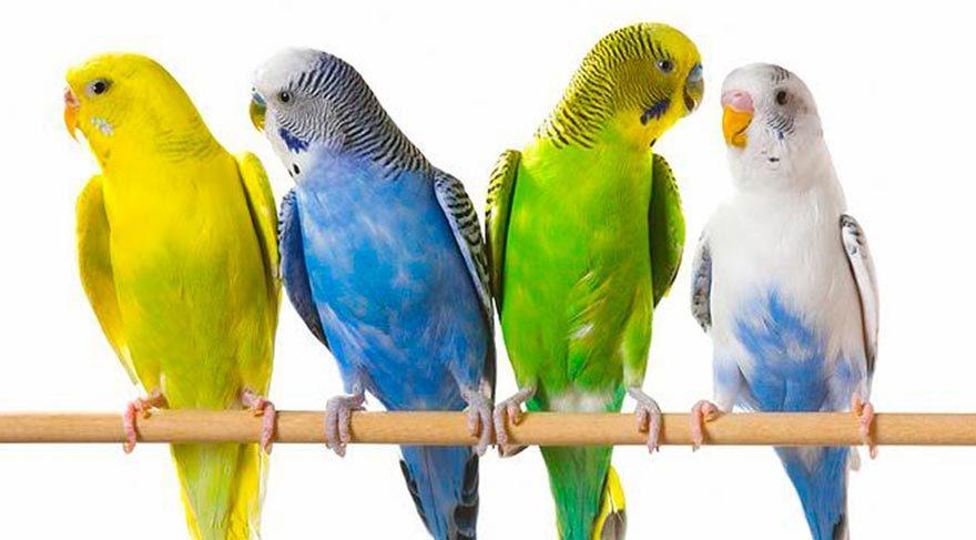 Kuş besliyorsanız akciğerlerinize DiKKAT