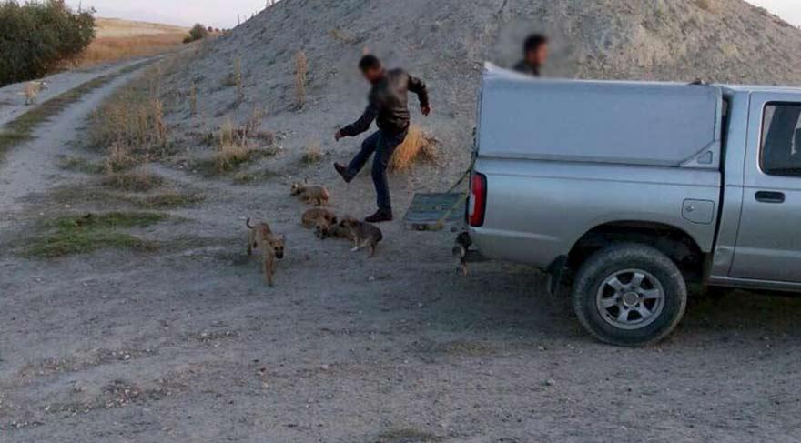Ürgüp'te 'köpek tekmeleme' iddiası! Belediye önce yalanladı, sonra soruşturma başlattı