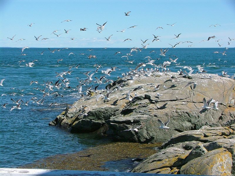 Ada dalış tutkunlarının uğrak yerlerinden