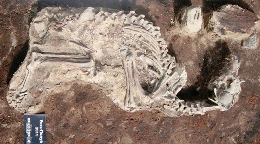 Sibirya'da 2000 yıllık köpek mezarlığı bulundu