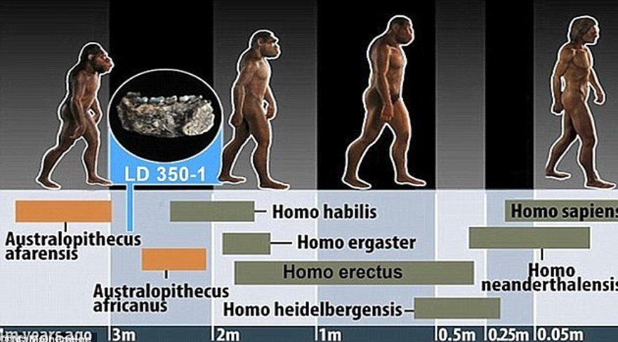 3.2 milyon yaşındaki insansı Lucy'nin nasıl hayatını kaybettiği ortaya çıktı