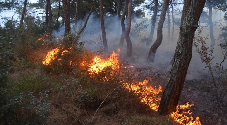 Mudanya'daki yangında 10 dönümlük arazi zarar gördü