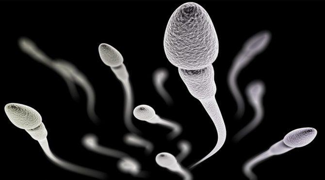 Sperm tahlilindeki 4 kriter