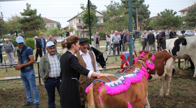Tarım festivalinde yarışmaya inekleri süsleyip getirdi