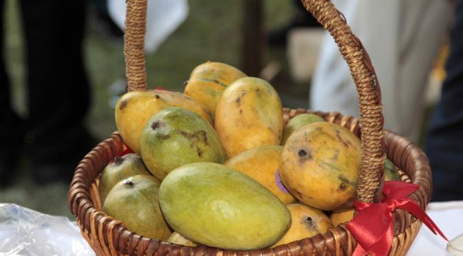 Pakistan'ın Ankara Büyükelçiliği'nde mango festivali