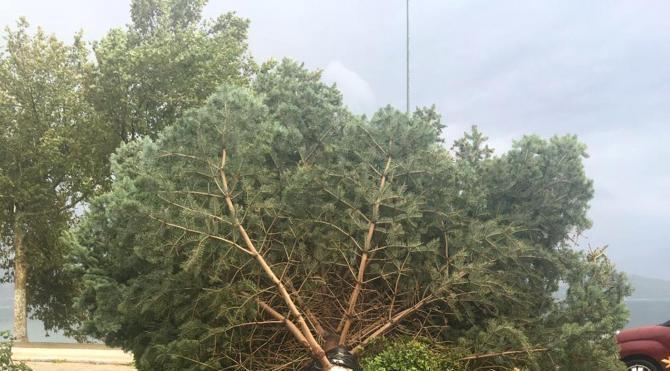 Isparta'da şiddetli rüzgar ağaçları devirdi