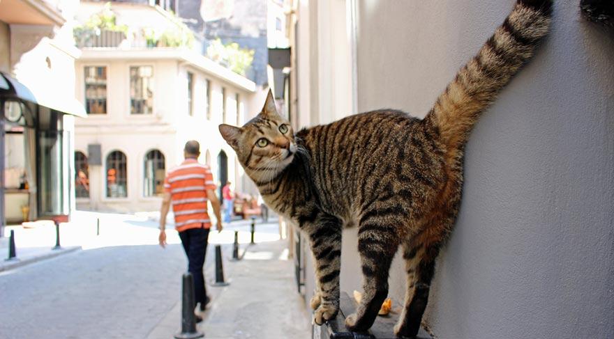 İstanbul kedilerin başkenti