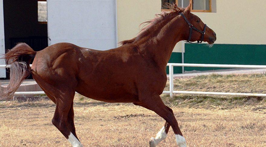 Atlara da FETÖ operasyonu