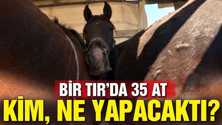 Bir TIR'dan 35 at çıktı