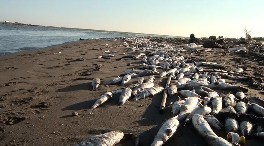 Balık ölümlerinde analiz raporu bekleniyor