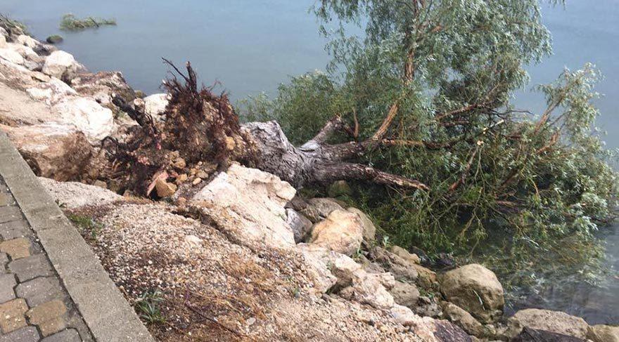 Eğirdir'de şiddetli rüzgar ağaçları yerinden söktü