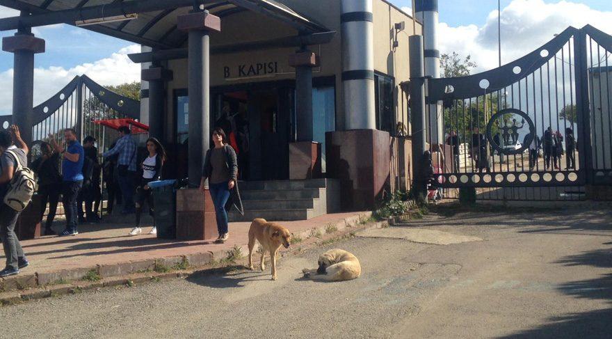 Köpek bıçaklayan profesör için kampanya başlatıldı
