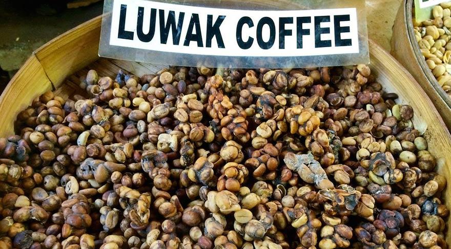 Dünyanın en pahalı kahvesi Kopi Luwak