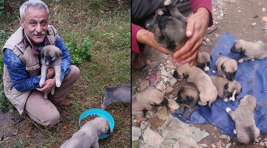 Öğretmen, 9 köpek yavrusuna sahip çıktı
