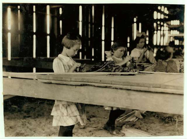 the-interior-of-a-tobacco-shed-hawthorn-farm-girls-in-foreground-are-8-9-and-10-years-old-the-10-year-old-makes-050-a-day-twelve-workers-on-this-farm-were-8-to-14-years-old-and-about-15-are-over-15-years