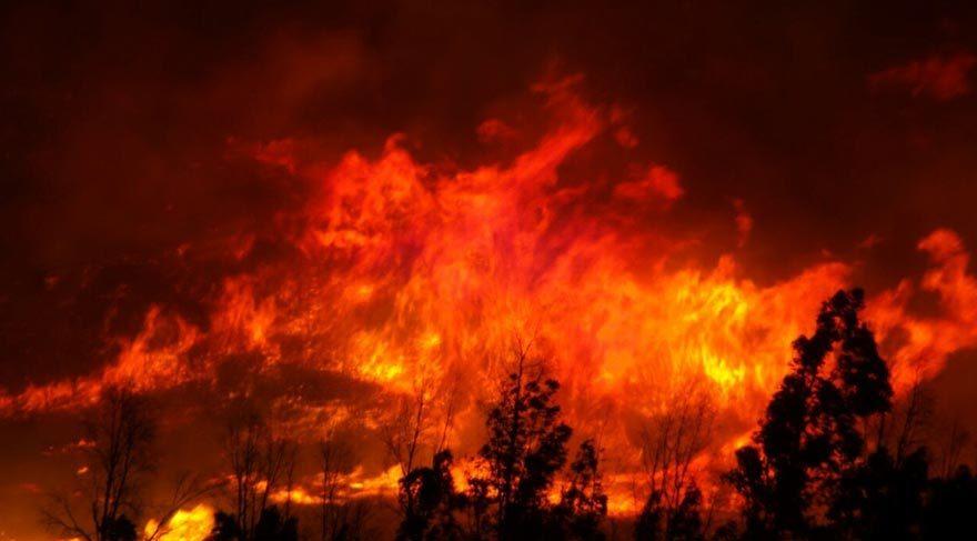 İzmir'de büyük orman yangını!