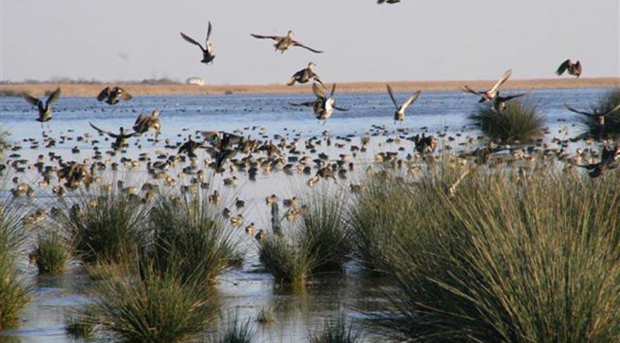 Kuş Cenneti ile tanınan ünlü ilçemiz: Manyas