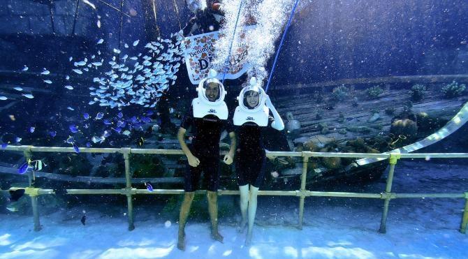 4 bin egzotik balık arasında evlilik teklifi