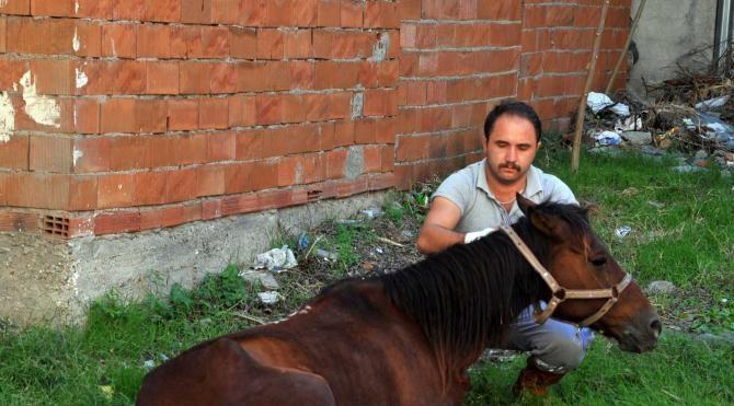 Terkedilen hasta at, hayata döndürüldü