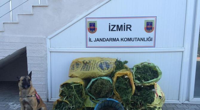 İzmir'de 86.5 kilo esrar ele geçirildi